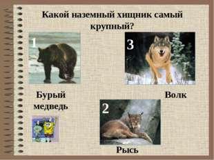 Какой наземный хищник самый крупный? 1 2 3 Бурый медведь Рысь Волк