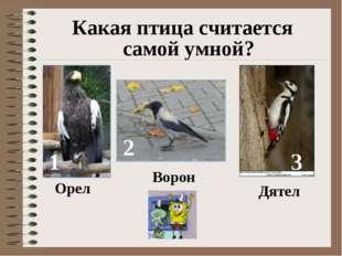 Какая птица считается самой умной? 1 2 3 Орел Ворон Дятел