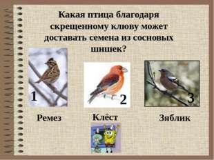 Какая птица благодаря скрещенному клюву может доставать семена из сосновых ши
