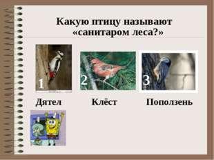 Какую птицу называют «санитаром леса?» 1 2 3 Дятел Клёст Поползень