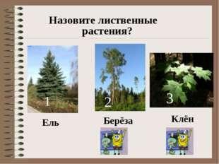 Назовите лиственные растения? Ель Клён Берёза 1 2 3
