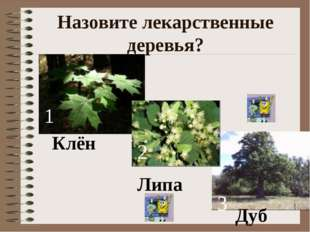 Назовите лекарственные деревья? Клён 1 Липа 2 3 Дуб