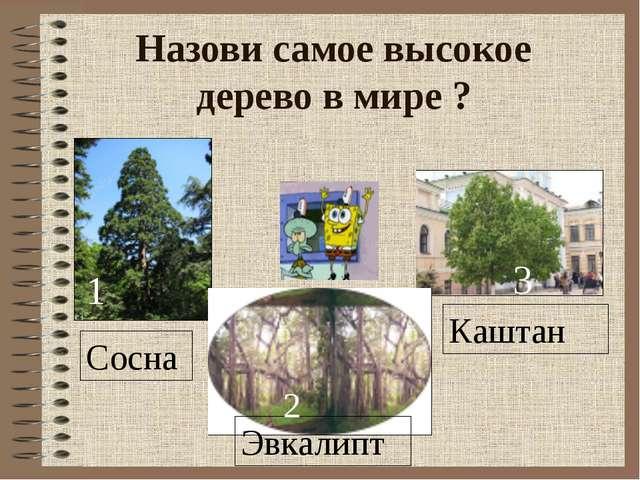 Назови самое высокое дерево в мире ? Сосна Эвкалипт Каштан 1 2 3