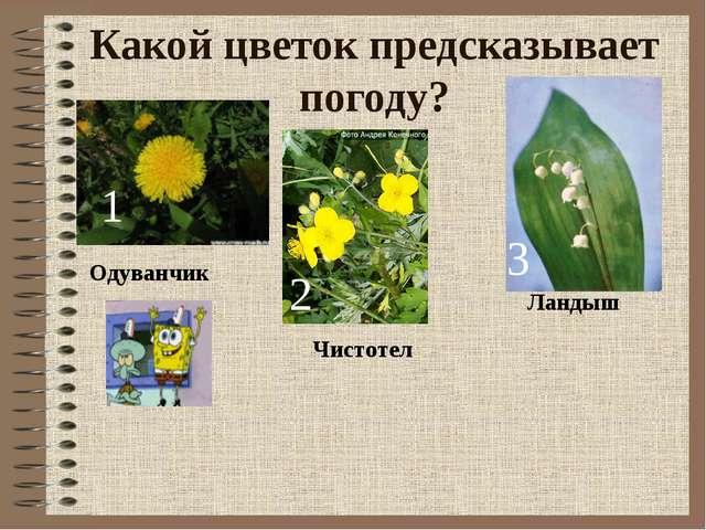 Какой цветок предсказывает погоду? 1 2 3 Одуванчик Чистотел Ландыш