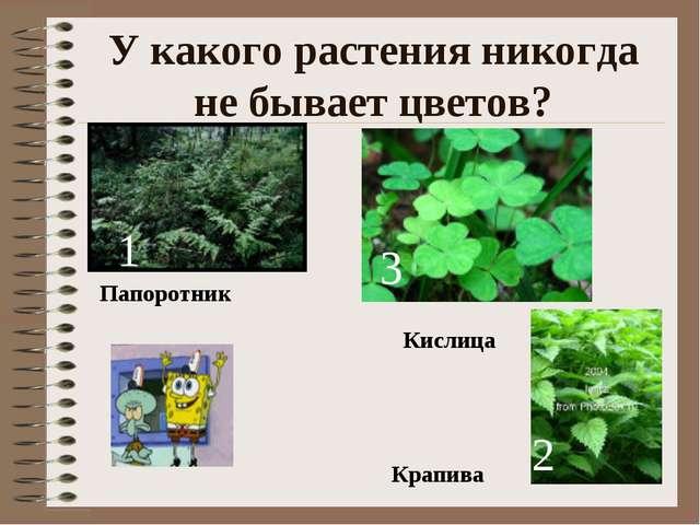 У какого растения никогда не бывает цветов? 1 2 3 Папоротник Крапива Кислица