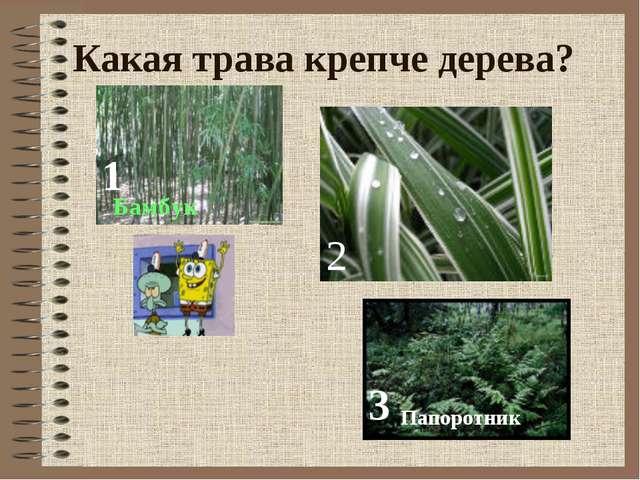 Какая трава крепче дерева? 1 Папоротник 2 Бамбук 3