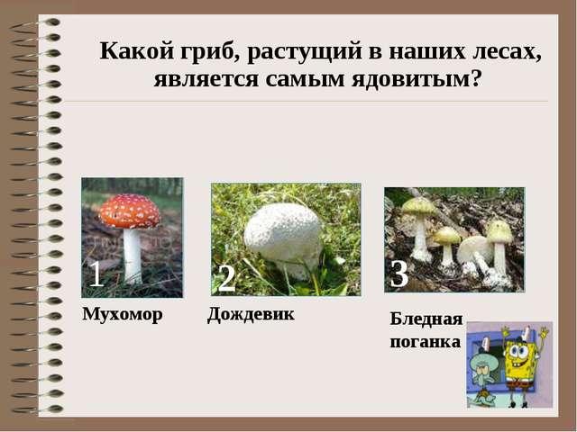 Какой гриб, растущий в наших лесах, является самым ядовитым? 1 Мухомор 2 Дож...