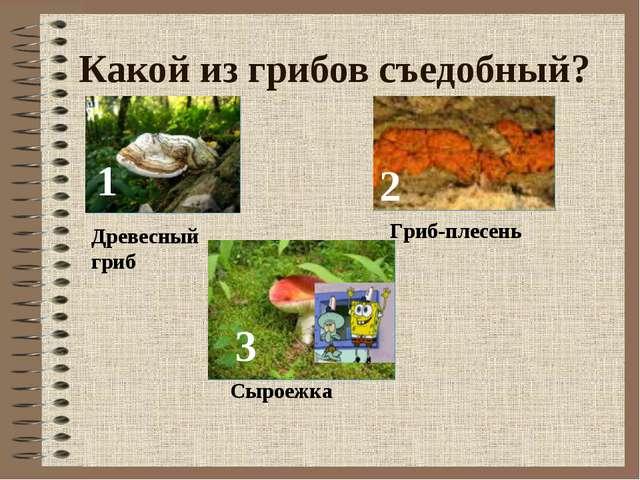 Какой из грибов съедобный? 1 2 3 Древесный гриб Гриб-плесень Сыроежка
