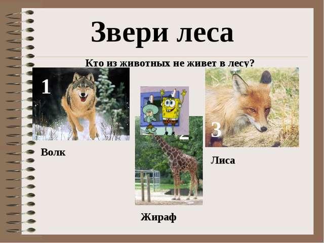 Звери леса Кто из животных не живет в лесу? 1 Волк 2 Жираф 3 Лиса