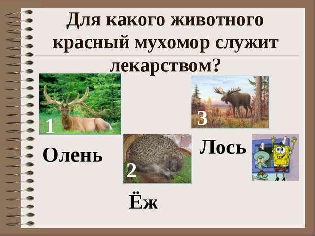 Для какого животного красный мухомор служит лекарством? 1 2 3 Олень Ёж Лось