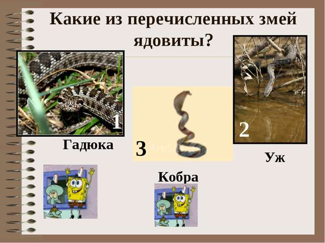 Какие из перечисленных змей ядовиты? Гадюка Кобра Уж 1 2 3