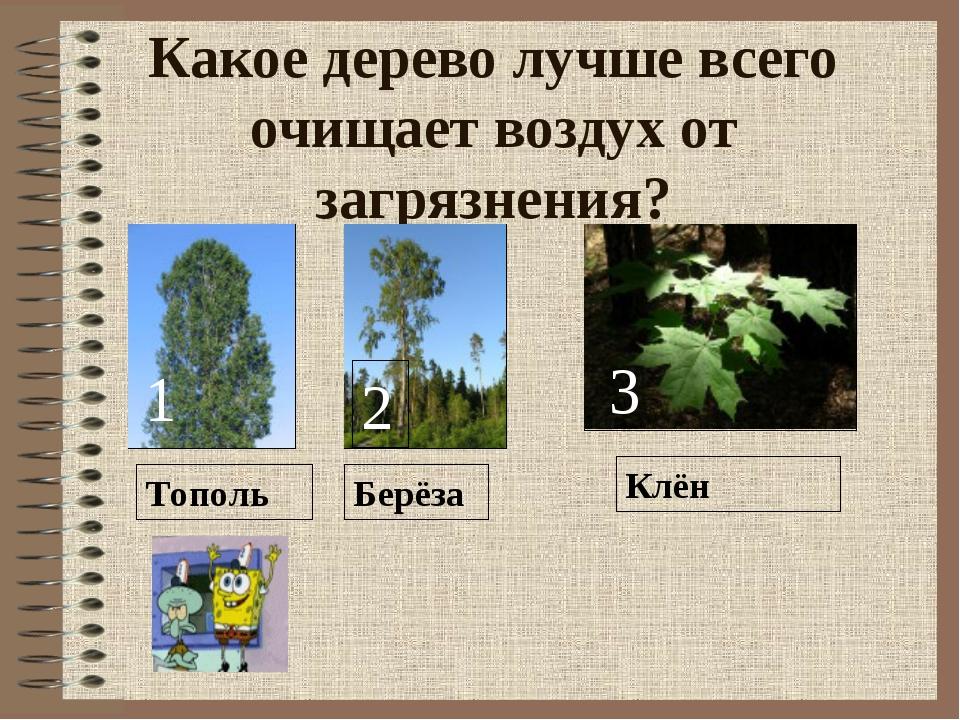 Какое дерево лучше всего очищает воздух от загрязнения? Тополь 1 Берёза Клён...