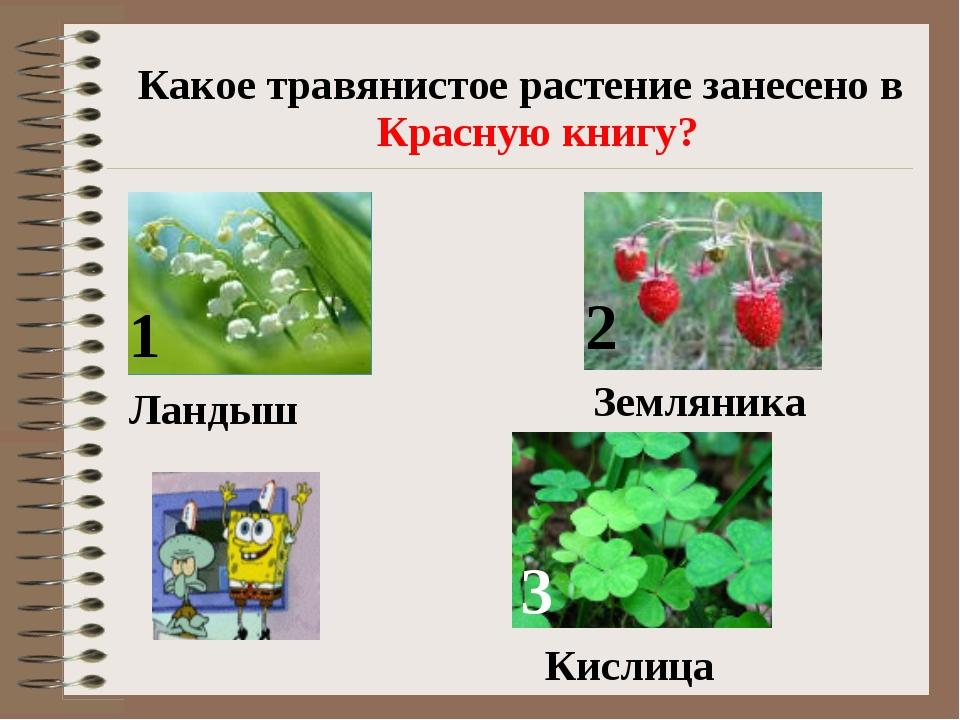 Какое травянистое растение занесено в Красную книгу? 1 2 3 Ландыш Земляника К...