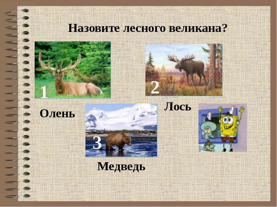 Назовите лесного великана? 1 2 3 Олень Лось Медведь