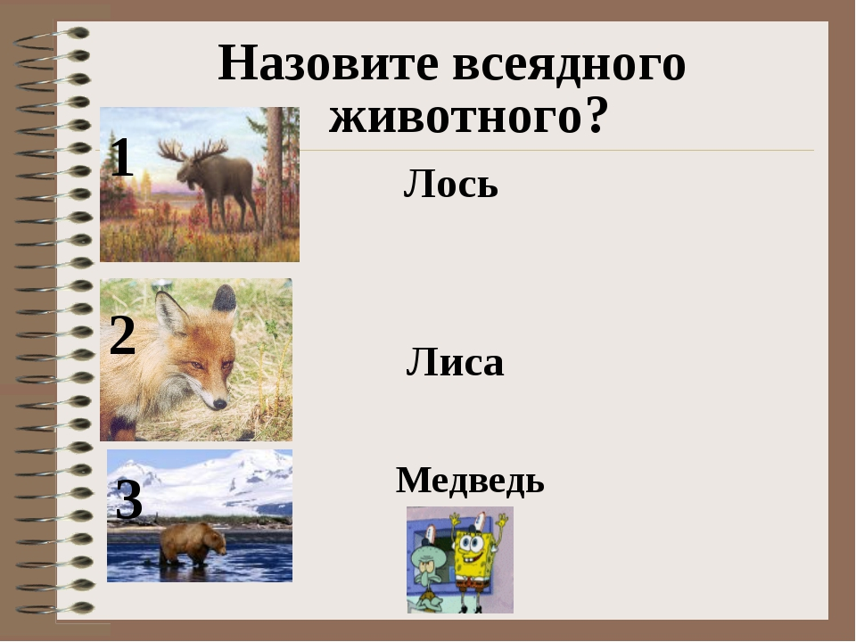 Назовите всеядного животного? 1 2 3 Лось Лиса Медведь
