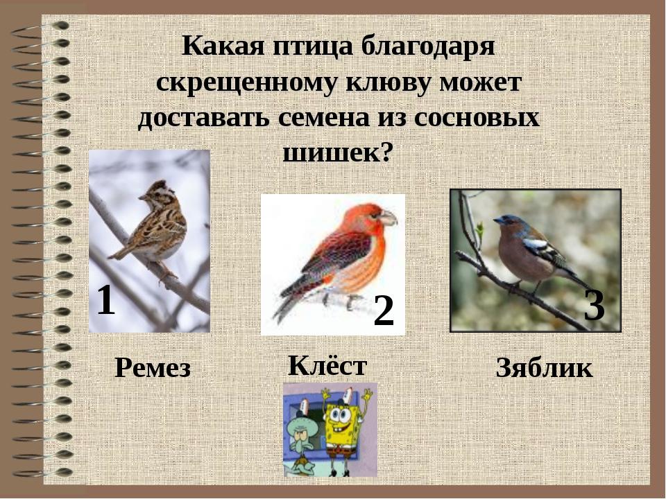 Какая птица благодаря скрещенному клюву может доставать семена из сосновых ши...