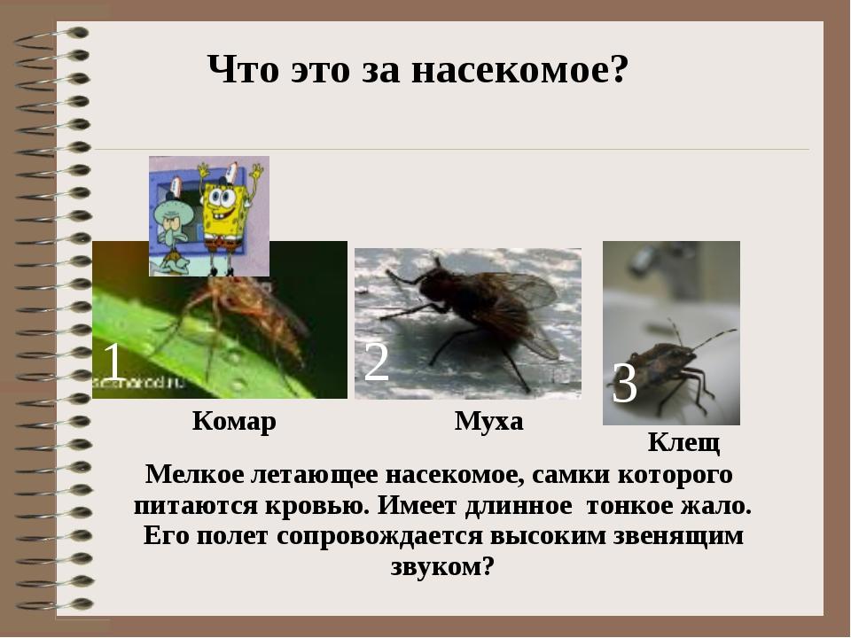 Комар 1 2 3 Муха Клещ Что это за насекомое? Мелкое летающее насекомое, самки...