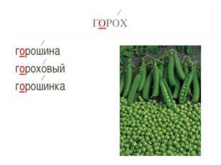 ГОРОХ горошина гороховый горошинка