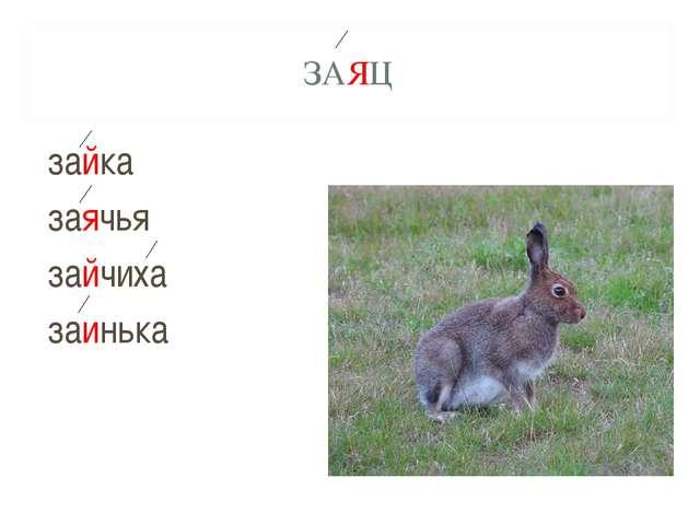 ЗАЯЦ зайка заячья зайчиха заинька