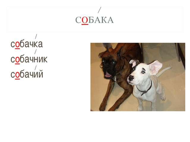 СОБАКА собачка собачник собачий