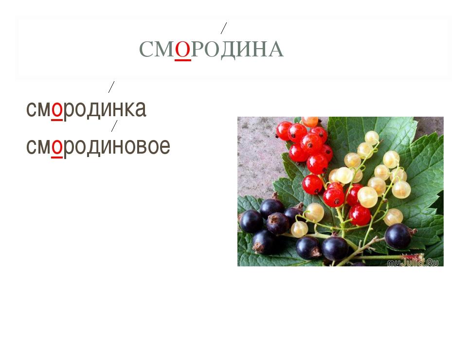 СМОРОДИНА смородинка смородиновое