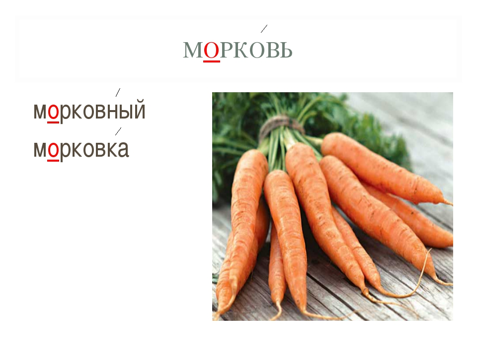 МОРКОВЬ морковный морковка