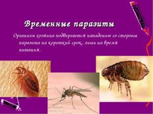 Временные паразиты Организм хозяина подвергается нападению со стороны паразит
