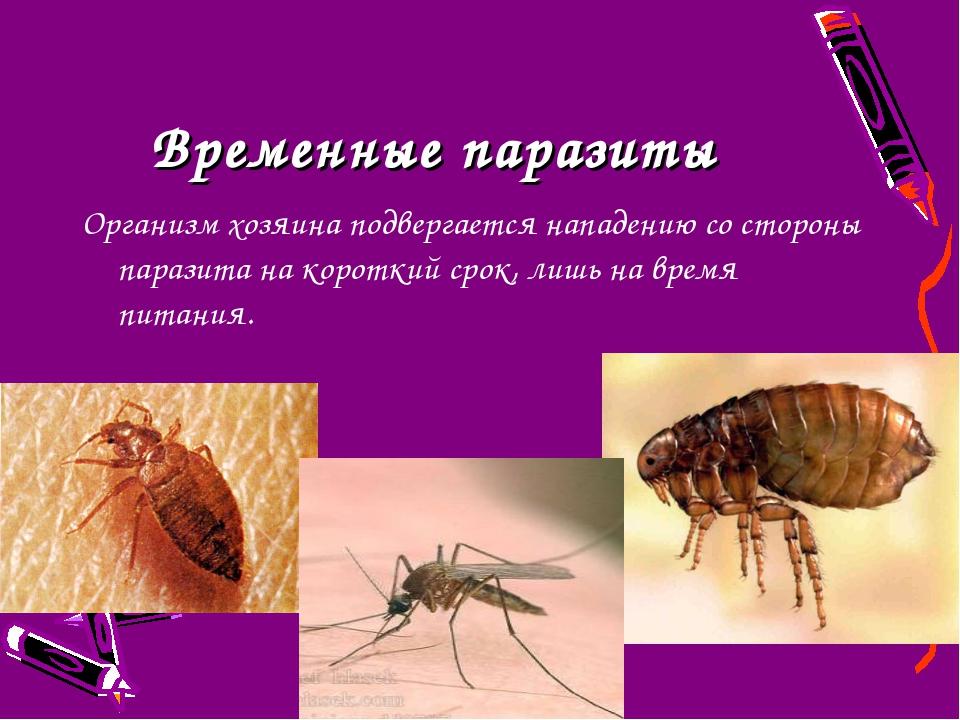 Временные паразиты Организм хозяина подвергается нападению со стороны паразит...