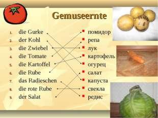 Gemuseernte die Gurke der Kohl die Zwiebel die Tomate die Kartoffel die Rube