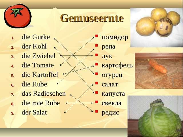 Gemuseernte die Gurke der Kohl die Zwiebel die Tomate die Kartoffel die Rube...