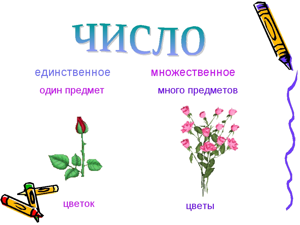единственное один предмет множественное много предметов цветок цветы