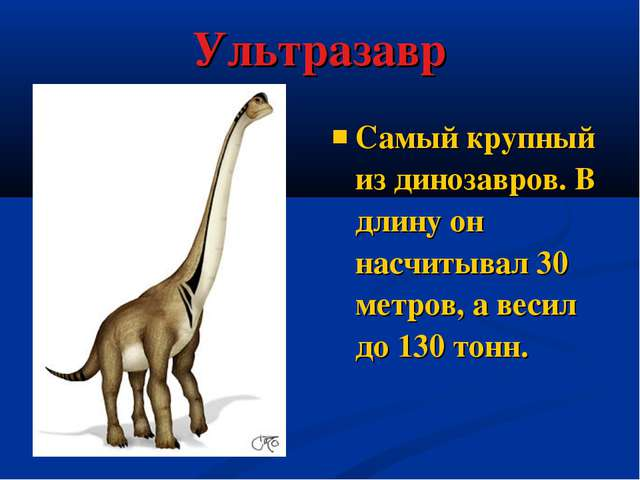 Ультразавр Самый крупный из динозавров. В длину он насчитывал 30 метров, а ве...