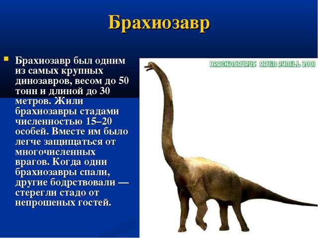 Брахиозавр Брахиозавр был одним из самых крупных динозавров, весом до 50 тонн...