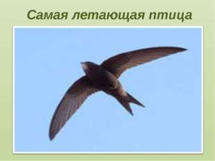 Самая летающая птица