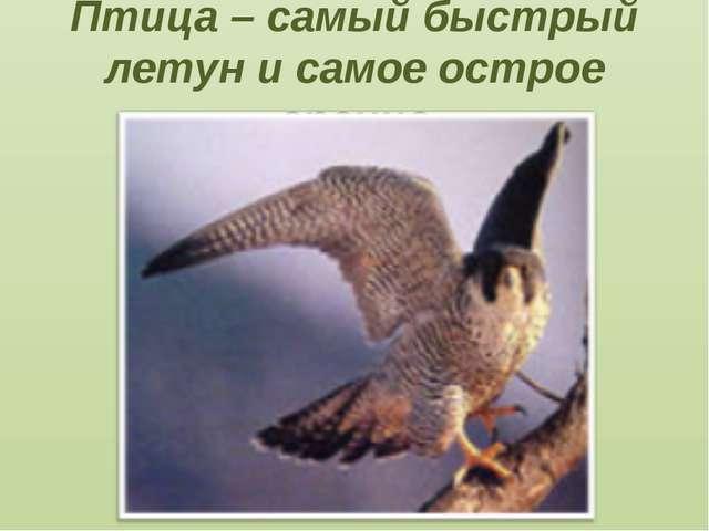 Птица – самый быстрый летун и самое острое зрение