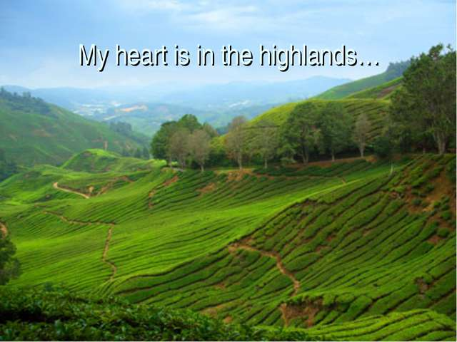 My heart is in the highlands…