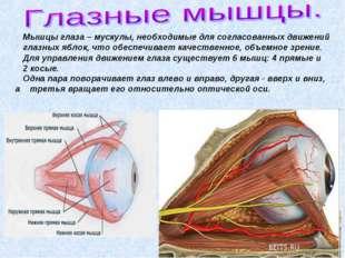 Мышцы глаза – мускулы, необходимые для согласованных движений глазных яблок,