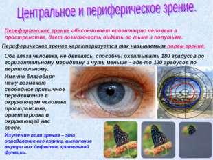 Переферическое зрение обеспечивает ориентацию человека в пространстве, дает в