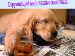 4.В глазах собаки имеется меньше «колбочек», ответственных за цветовосприятие