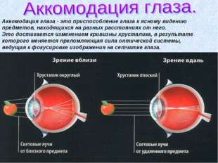 Аккомодация глаза - это приспособление глаза к ясному видению предметов, нахо