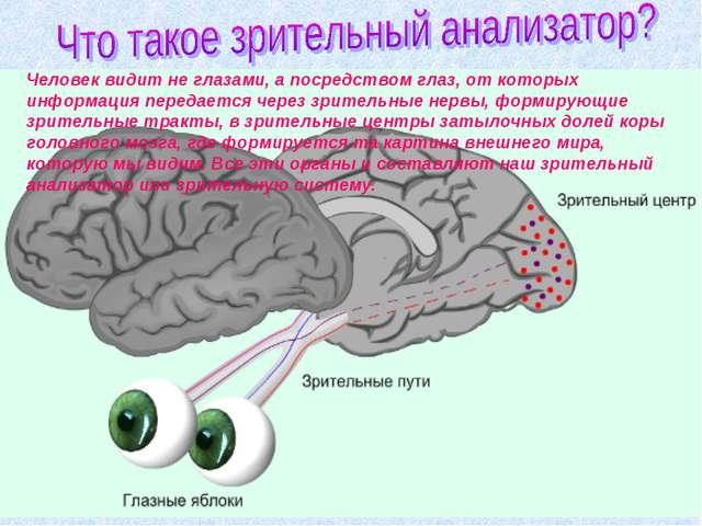 Человек видит не глазами, а посредством глаз, от которых информация передаетс...