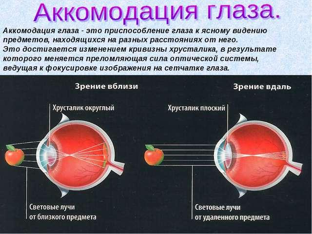 Аккомодация глаза - это приспособление глаза к ясному видению предметов, нахо...