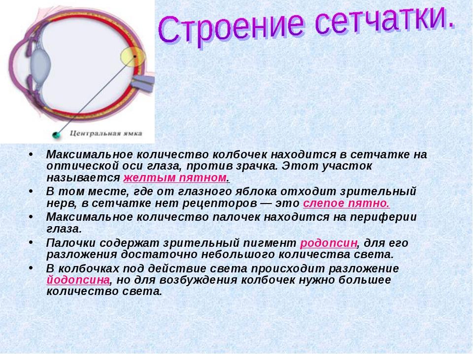 Максимальное количество колбочек находится в сетчатке на оптической оси глаза...
