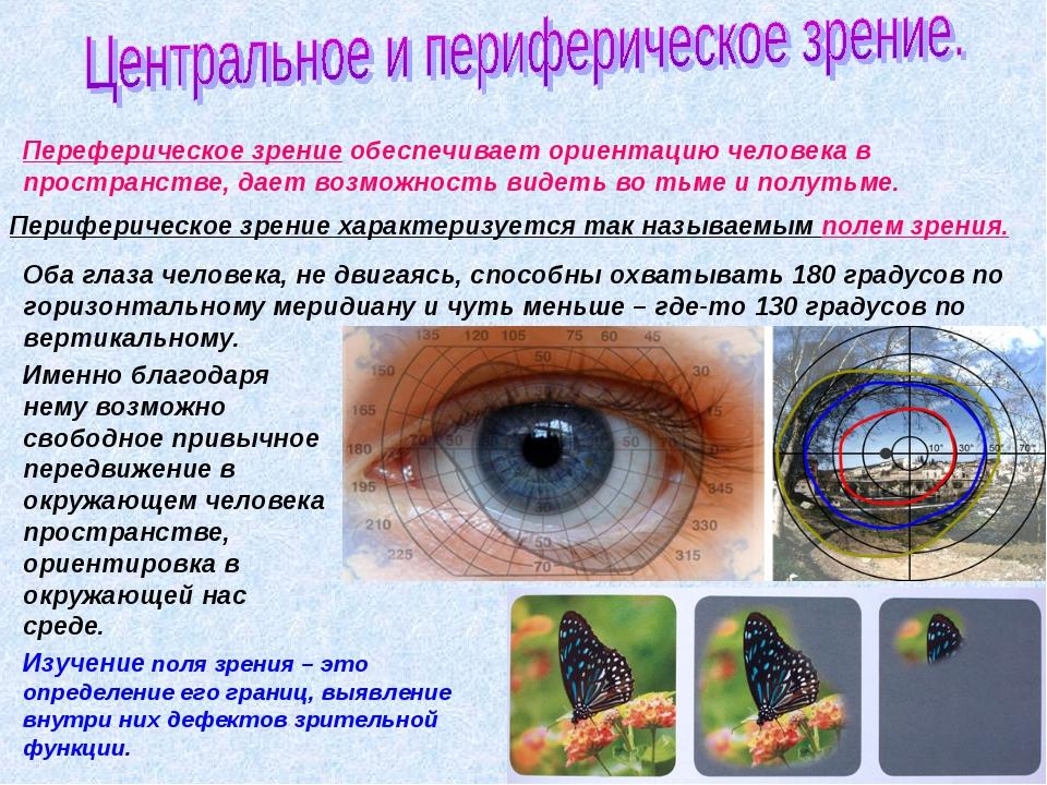 Переферическое зрение обеспечивает ориентацию человека в пространстве, дает в...