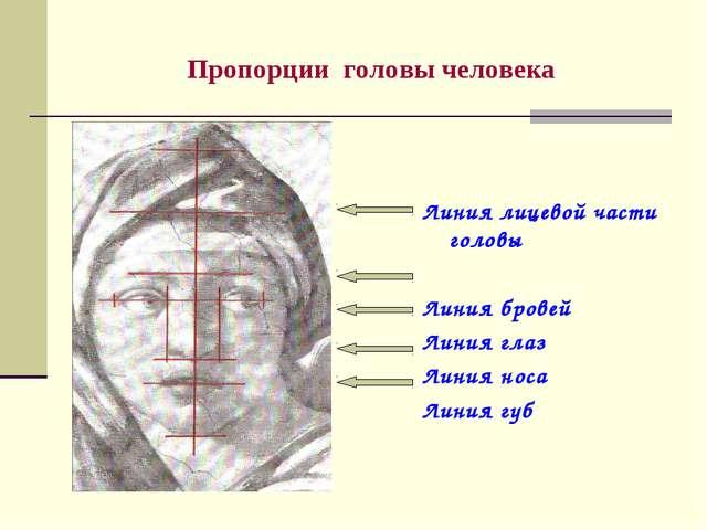 Пропорции головы человека Линия лицевой части головы Линия бровей Линия глаз...