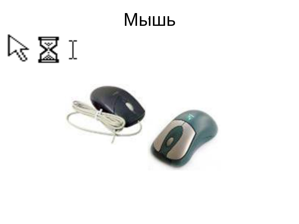 Мышь ,