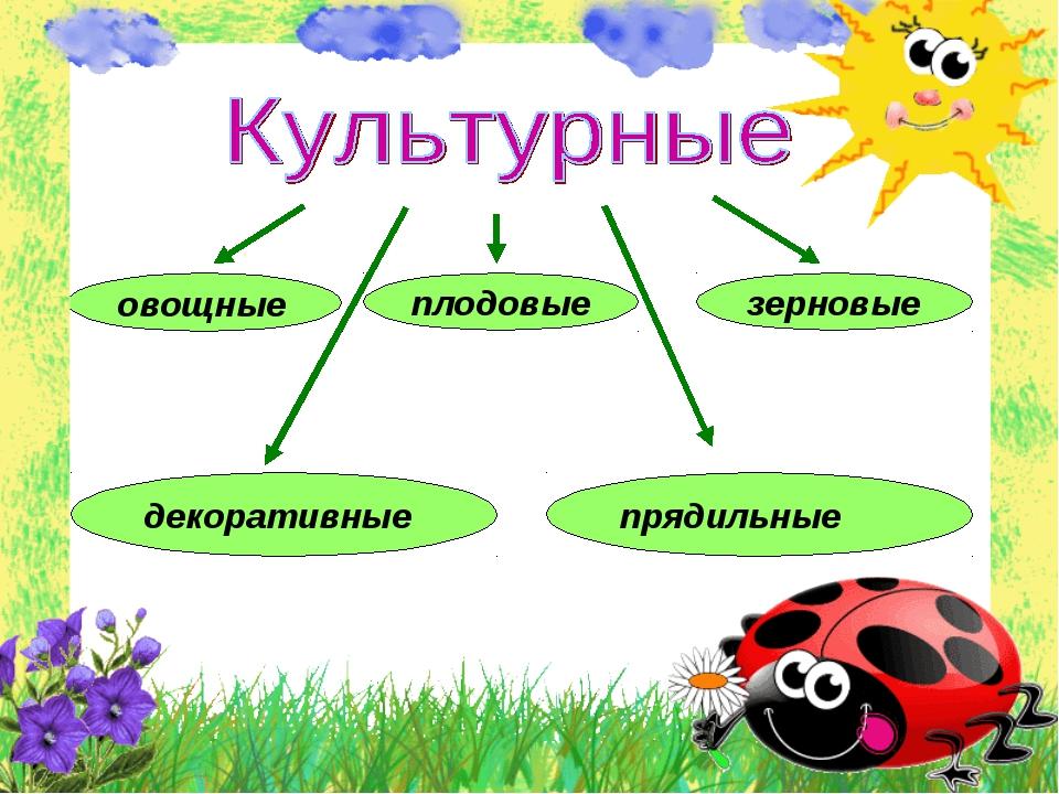 овощные плодовые декоративные зерновые прядильные