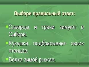 Скворцы и грачи зимуют в Сибири. Кукушка подбрасывает своих птенцов. Белка зи