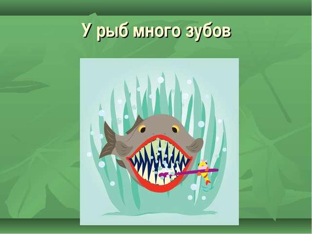 У рыб много зубов