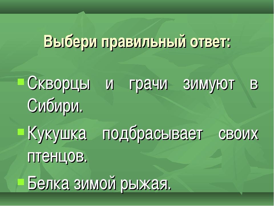 Скворцы и грачи зимуют в Сибири. Кукушка подбрасывает своих птенцов. Белка зи...